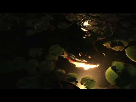 Mystical Koi Relaxation Video